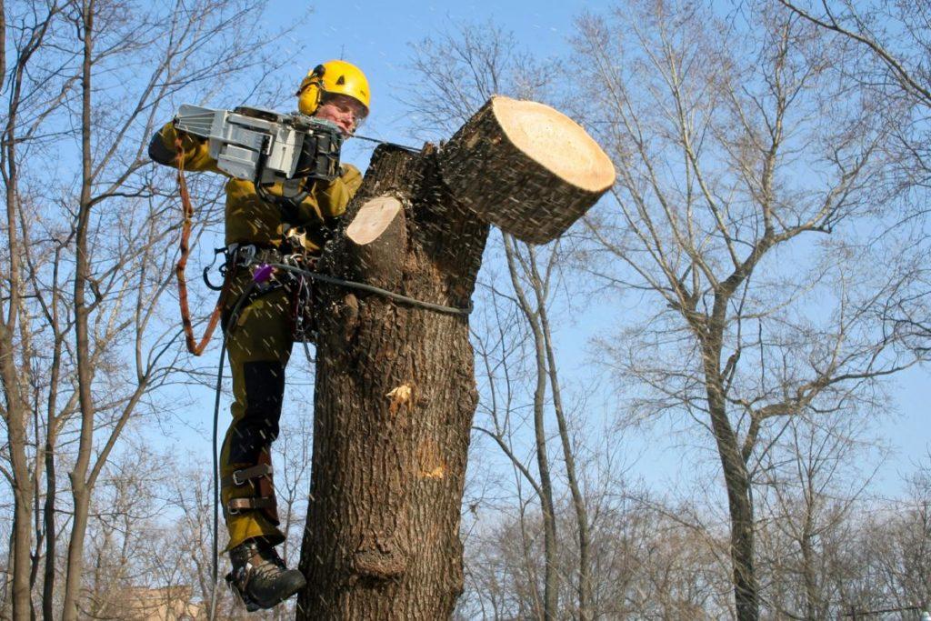 Работы по обрезке деревьев внесут изменения в работу трамвайных маршрутов